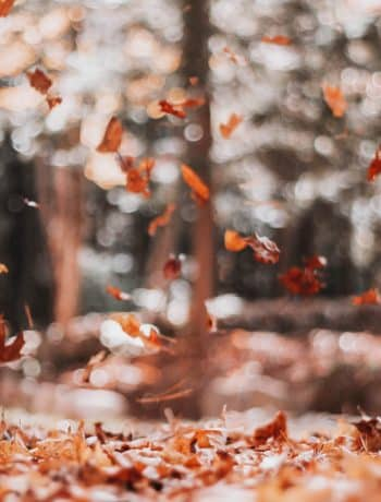Gratitude: 6 Ways To Practice It During Chaotic Times, gratitude challenge, list of ways to practice gratitude daily weekly or monthly, positive psychology and emotions, #gratitude, #gratitudechallenge, #gratitudejournal, #gratitudelist, #grateful, #gratefulness